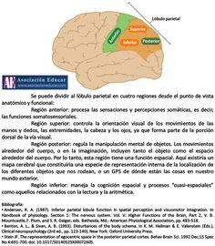 Brain Anatomy, Medical Anatomy, Medicine Student, Lemon Detox, Traumatic Brain Injury, Pharmacology, Home Schooling, Physical Therapy, Psychology