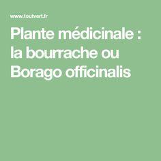 Plante médicinale : la bourrache ou Borago officinalis