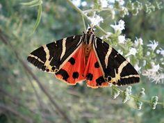 Valley of butterflies, Rhodes location information details - Guide2Rhodes