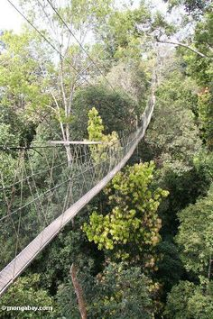Rain forest canopy walkway at Taman Negara (Taman Negara National Park in Malaysia)