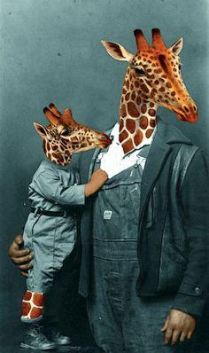 THAT'S MY BOY Art Print giraffes