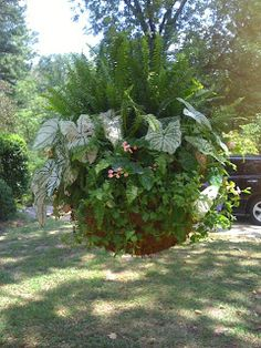 Container gardening, copy the gardening pin article reference 3377444136 to adding plants in a pot. Container Flowers, Flower Planters, Container Plants, Container Gardening, Outdoor Planters, Garden Planters, Outdoor Gardens, Hanging Gardens, Dream Garden