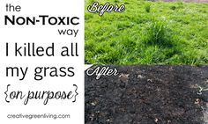 The Non-Toxic Way I Killed All My Grass (On Purpose!) Looking for an easy, non-toxic way to kill grass? This is best grass killing solution: It require no chemicals or back breaking labor. Just a little time. How To Remove Grass, How To Kill Grass, Horticulture, Killing Weeds, Grass Weeds, No Grass Backyard, Weed Killer, Landscaping Tips, Lawn Care
