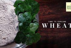 The New Superfood? Weighing Millet Benefits and Risks Millet Benefits, Green Revolution, High Fiber Foods, Gluten Intolerance, Gluten Free Flour, Superfood, Farmer, Seeds