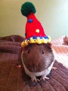 guinea+pigs+in+costumes | Guinea Pig Birthday Party Hat Costume CUSTOM by iheartneedlework, $13 ...