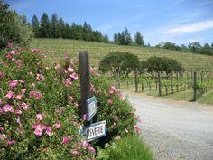 #Napa #California #winecountry #BetsyHarderPhoto