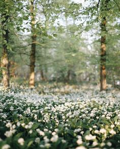 Image discovered by Not Only Photos. Find images and videos about photography, nature and flowers on We Heart It - the app to get lost in what you love. Mgs Rising, Beautiful World, Beautiful Places, Beautiful Flowers, Garden Types, All Nature, Autumn Nature, Plantation, The Great Outdoors