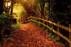 Warm colors of a cool autumn afternoon. <3