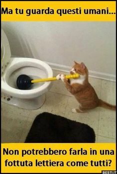 Ma tu guarda questi umani Funny Cat Memes, Funny Facts, You Funny, Funny Animals, Cute Animals, Funny Moments, Funny Things, Funny Stuff, Serious Quotes