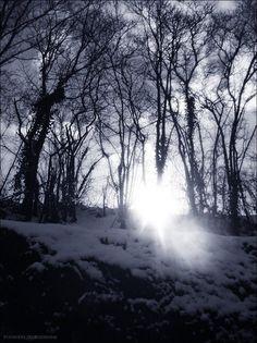 Winter Paradise II by PoussiereObsidienne.deviantart.com on @deviantART