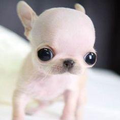 Quero um, que fofo!!