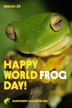 We are building a powerful alliance to create a better future for people and nature. Green Frog, Wild Things, Frogs, Climate Change, Habitats, Seal, Choices, World, Healthy