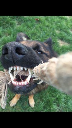 those teeth
