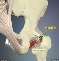 股関節外旋筋のストレッチ14