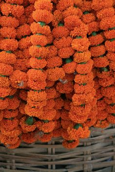Marigolds Grown In Northern India