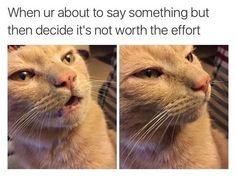 Top Laughing so Hard cat memes & cat memes reason Stupid Funny Memes, Funny Animal Memes, Funny Relatable Memes, Funny Posts, The Funny, Funny Animals, Funny Quotes, Introvert Quotes, Introvert Meme