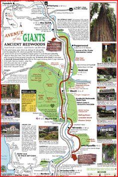 Avenue of the Giants map Arcata California, California Map, California Vacation, Glass Beach California, Northern California Travel, California Destinations, Travel Destinations, West Coast Road Trip, Pacific Coast Highway