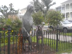 100 year old oak that died in hurricane Ike, is carved into the homeowners great dane!