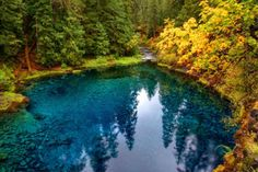 Blue Pool, McKenzie River, Oregon... This looks like a great place to visit in the fall.