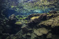 Snorkeling in Silfra Underwater Photography, Travel Photography, Plate Tectonics, Best Vacations, Snorkeling, Just Go, Iceland, Diving, My Photos