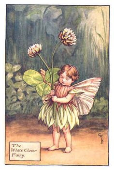1000 Images About Flower Fairies On Pinterest Cicely
