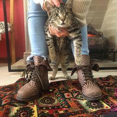 Cats, Animals, Leather, Gatos, Animales, Animaux, Animal, Cat, Animais