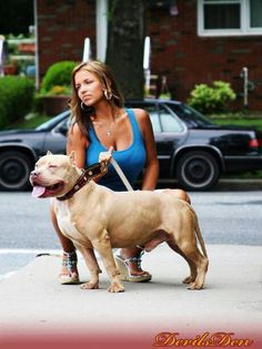 Pitbull lool at that beefy boy! American Bully, Pit Dog, Bully Dog, Bully Breed, Huge Dogs, Pitt Bulls, Pose, Pitbull Terrier, Bull Terriers