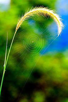 Nature's amazing beauty!