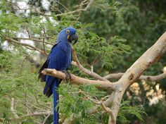 Brasilien: Abenteuer Pantanal und Amazonas – Peter Kiefer / AT Reisen Sa, 11. Nov., 13:45 - 14:15   Weltweit.Reisen Kiefer, Adventure, Animals, Pantanal, Amazon, Tour Operator, Brazil, World, Travel