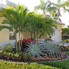 Tropical Backyard Landscaping, Cheap Landscaping Ideas, Florida Landscaping, Landscaping With Rocks, Front Yard Landscaping, Landscaping Design, Backyard Ideas, Florida Gardening, Mulch Landscaping
