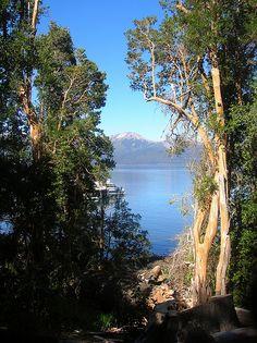 Bariloche - Bosque de arrayanes.