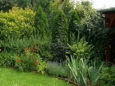Ezeket is ültesd tuja helyett | Gardenista Garden, Plants, Autumn, Garten, Fall Season, Lawn And Garden, Gardens, Fall, Plant