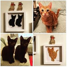 Meet #charliebrown #peannut & #woodstock 🐱🐈 How cute are they! Button Art Frames created from their photos! I need to create one for…