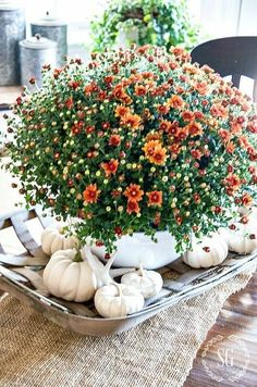 Flowers and white pumpkins