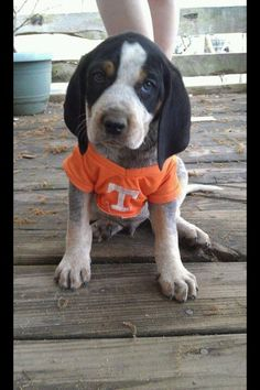 Joely, I hope your birthday is filled with dogs, lots of victories from the Tennessee Vols this season, working technology, kisse. Tn Vols Football, Tennessee Volunteers Football, Tennessee Football, Tennessee Titans, College Football, Football Rules, Football Helmets, Tennessee Girls, East Tennessee
