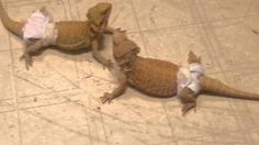 No shenanigans with this pair lol! Unusual Animals, Lol, Fun