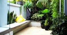 Teeny tiny paradise - Paddington Courtyard by Sydney-based think-outside-gardens via desiretoinspire.net