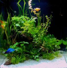 Underwater Forest in 2019 | ahmedali | Aquarium, 4k ultra ...