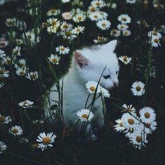 #Pet #Love #Animais