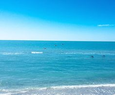 Pelicans Flying Over The Gulf Right In Front Of Us