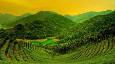 bing images | Bing Images - Tea Field Tutan - 台湾岛台北县石碇乡的茶田 ...