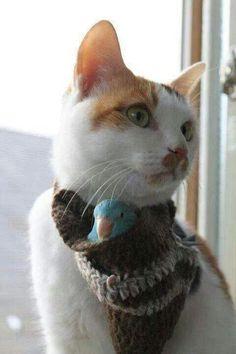 .kitty & birdie B F Fs ❤❤❤.