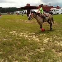 Kid Friendly Mare currently being shown by a 9 year old. for sale in Pike, Alabama :: HorseClicks