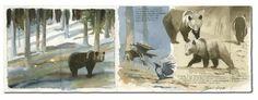 Federico Gemma - Wildlife Artist: watercolour