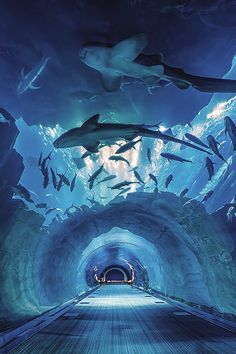 Dubai Aquarium Tunnel by Vinz Photographies