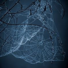 Is there anything as complex and beautiful as a spider web? It reminds me of lace. Nature has little miracles everywhere, just waiting to be discovered