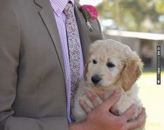 Can you handle the cuteness?         This groom surprised his bride with the labradoodle puppy she'd always wanted waiting for her at the end of the aisle! | CHECK OUT MORE IDEAS AT WEDDINGPINS.NET | #weddings #uniqueweddingideas #unique