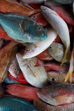 Grande Terre, Guadeloupe | #sea_life #guadeloupe #fish