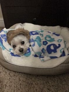 It's cold outside but cozy in my bed ❤️ #maltese