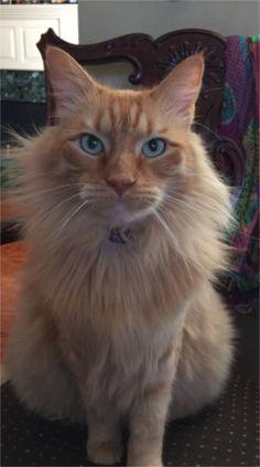 My cat Archie. Toni, Baton Rouge, LA - 2/13/2015